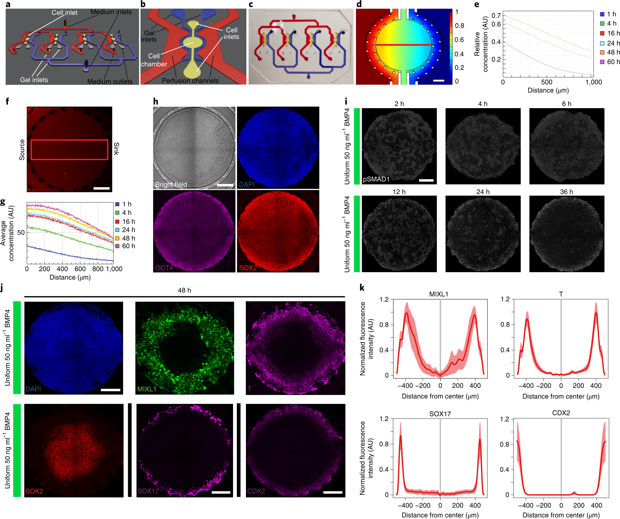 Engineered signaling centers for the spatially controlled patterning