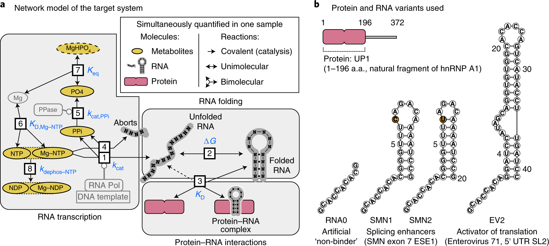Systems NMR: single-sample quantification of RNA, proteins