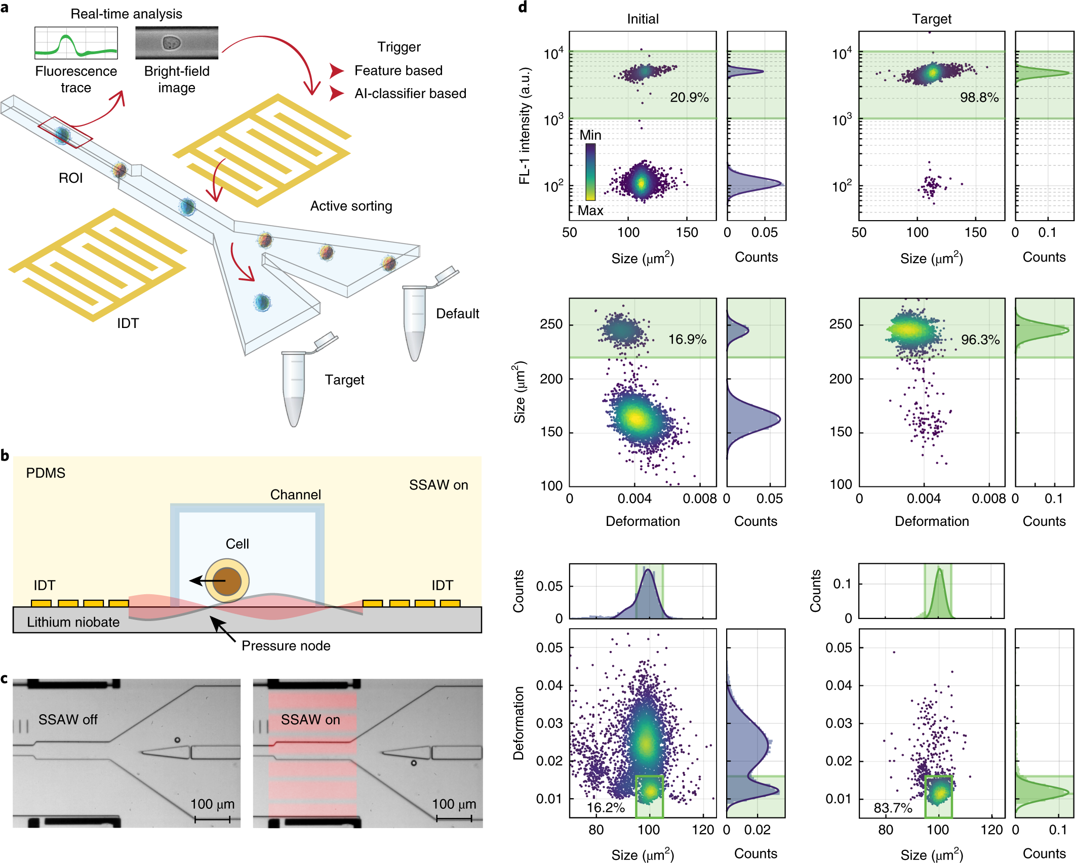 Intelligent image-based deformation-assisted cell sorting with molecul