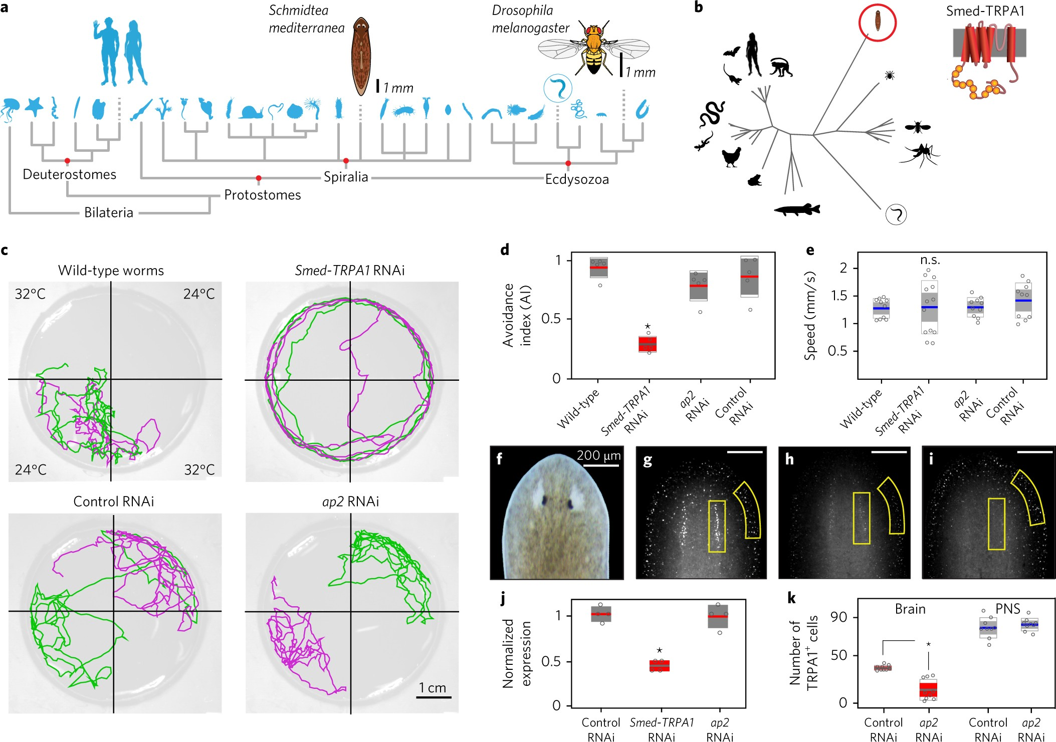 activation of planarian trpa1 by reactive oxygen species reveals a  conserved mechanism for animal nociception | nature neuroscience