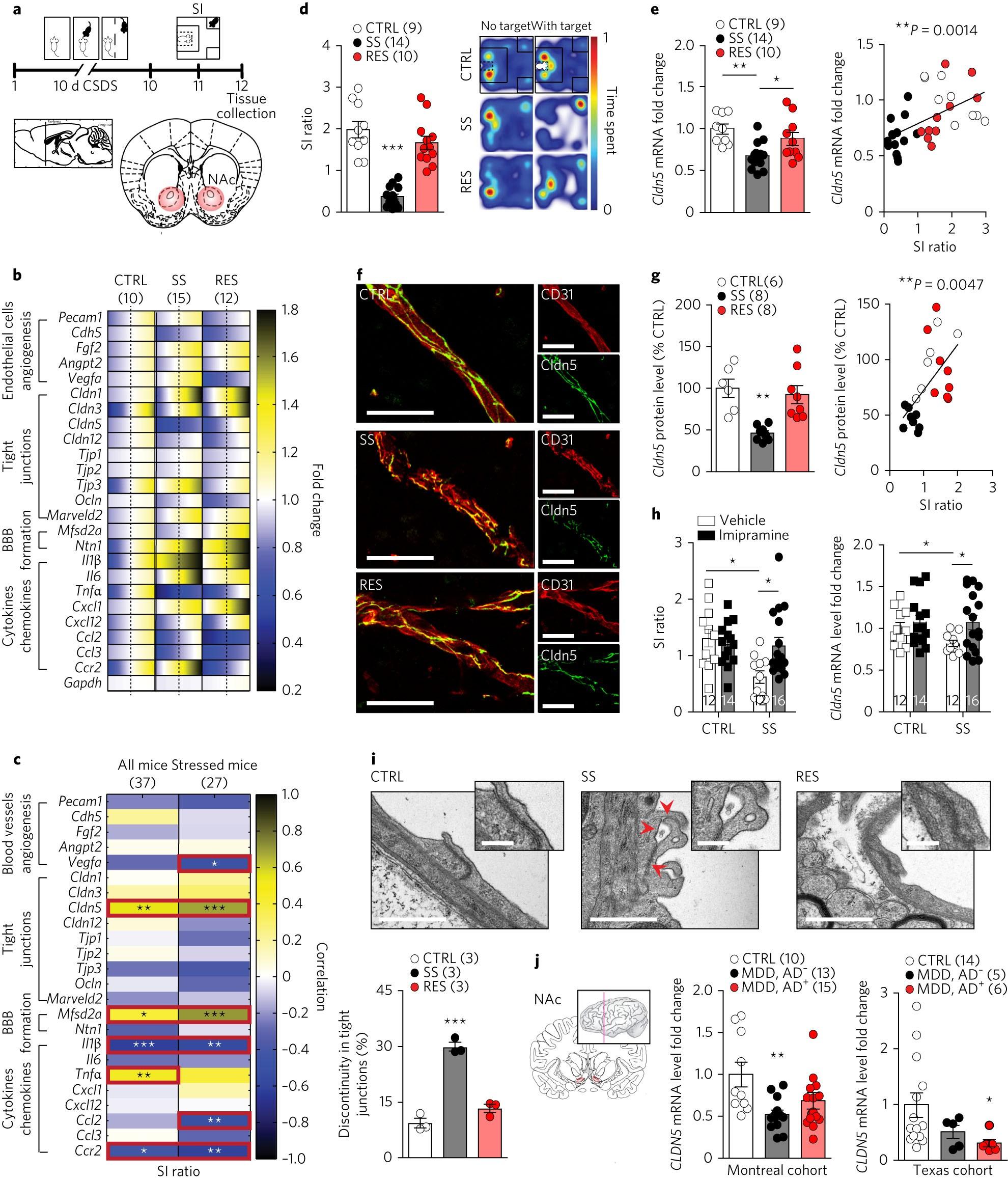 Social Stress Induces Neurovascular Pathology Promoting Depression