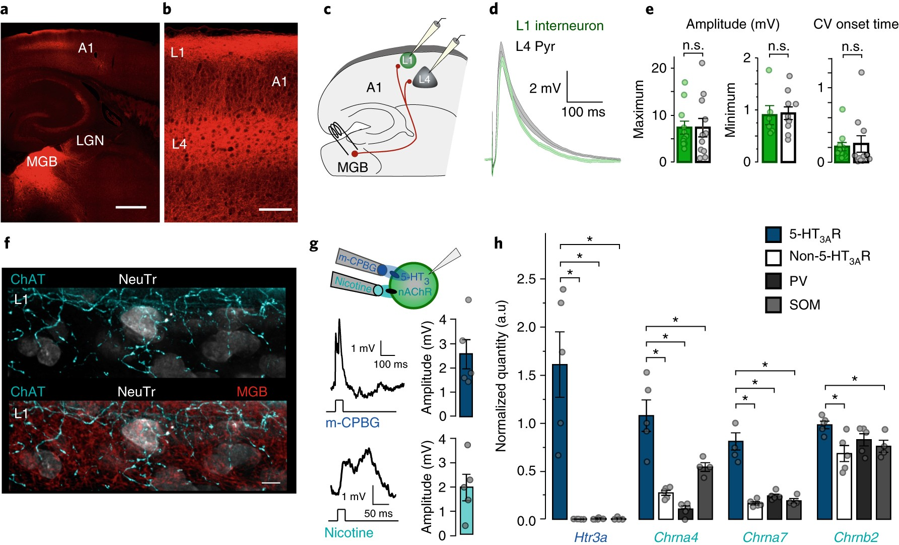 Inhibitory Circuit Gating Of Auditory Critical Period Plasticity Further Sound Generator Likewise The Nature Neuroscience