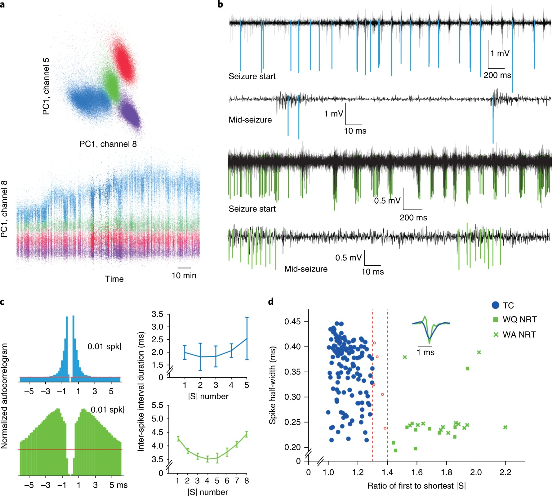 Cortical Drive And Thalamic Feed Forward Inhibition Control Reverse Motor Circuit Moreover Output Synchrony During Absence Seizures Nature Neuroscience