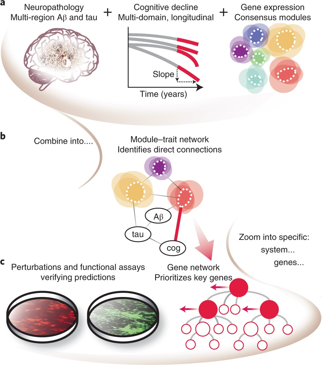 A molecular network of the aging human brain provides