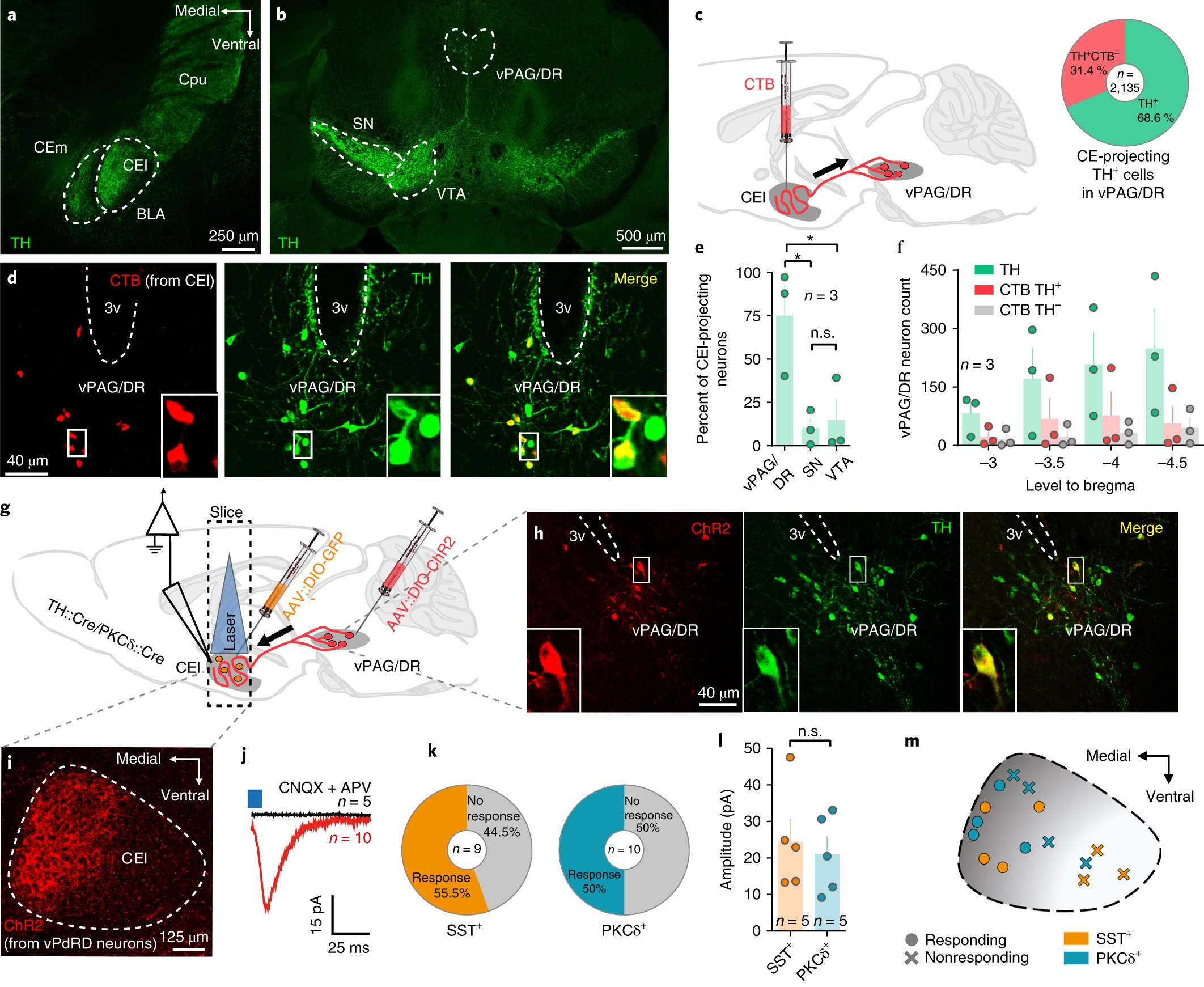 Dorsal Tegmental Dopamine Neurons Gate Associative Learning Of Fear Circuits Gt 6 12 Volt Adjustable Power Supply Circuit Schematic Nature Neuroscience