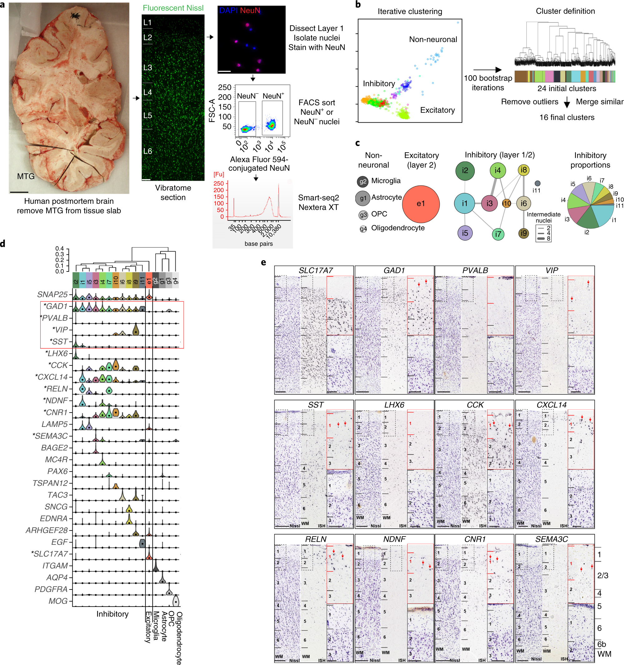 Transcriptomic and morphophysiological evidence for a specialized