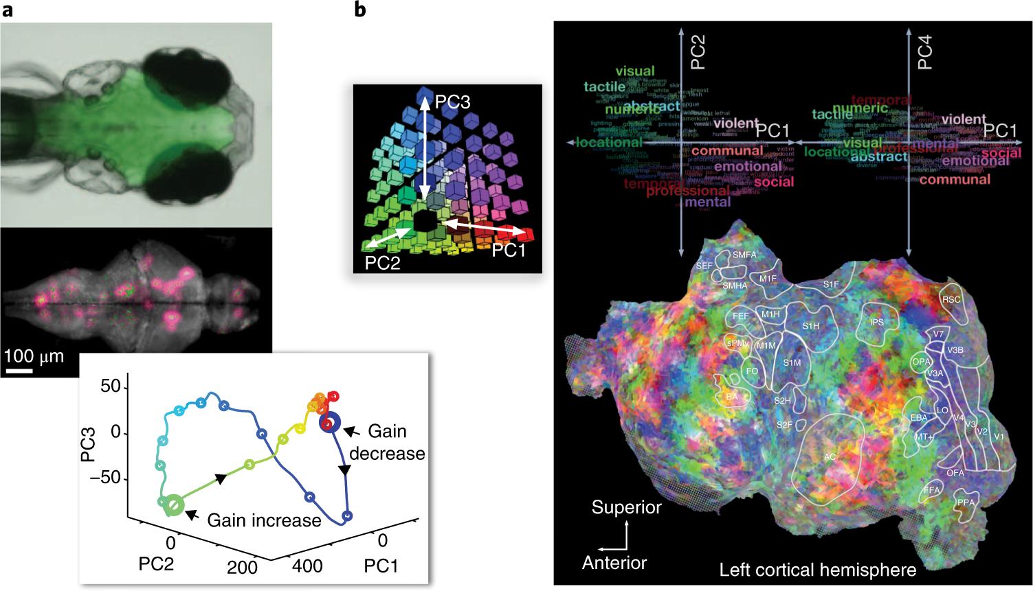 Cognitive computational neuroscience | Nature Neuroscience