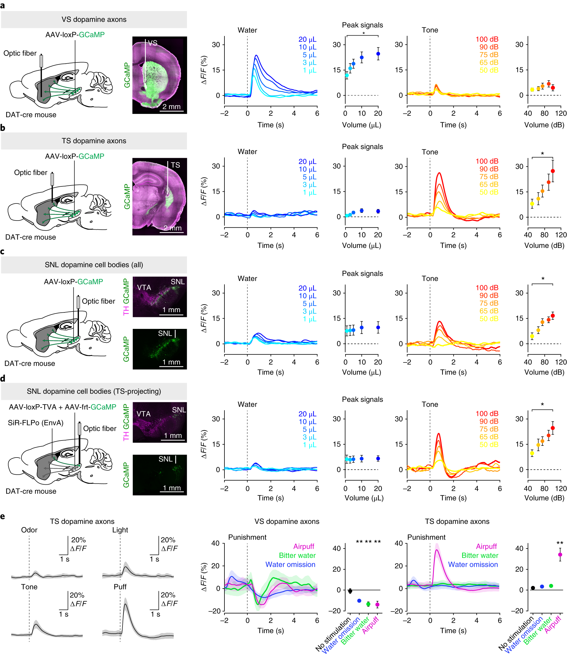 Dopamine Neurons Projecting To The Posterior Striatum Reinforce Conduit Schedule 40 And 80 Pdf Flexible Metal Electrical Avoidance Of Threatening Stimuli Nature Neuroscience