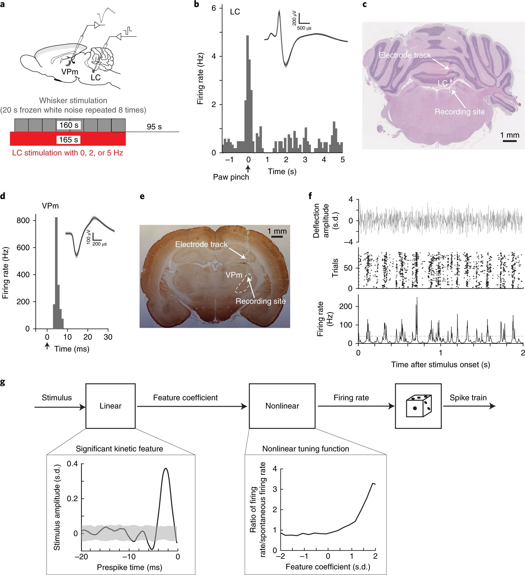 Locus Coeruleus Activation Enhances Thalamic Feature Selectivity Via Circuit Impedance Edit Response Natural Respond Norepinephrine Regulation Of Intrathalamic Dynamics Nature Neuroscience