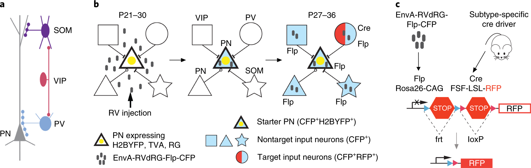 Intersectional monosynaptic tracing for dissecting subtype ... on
