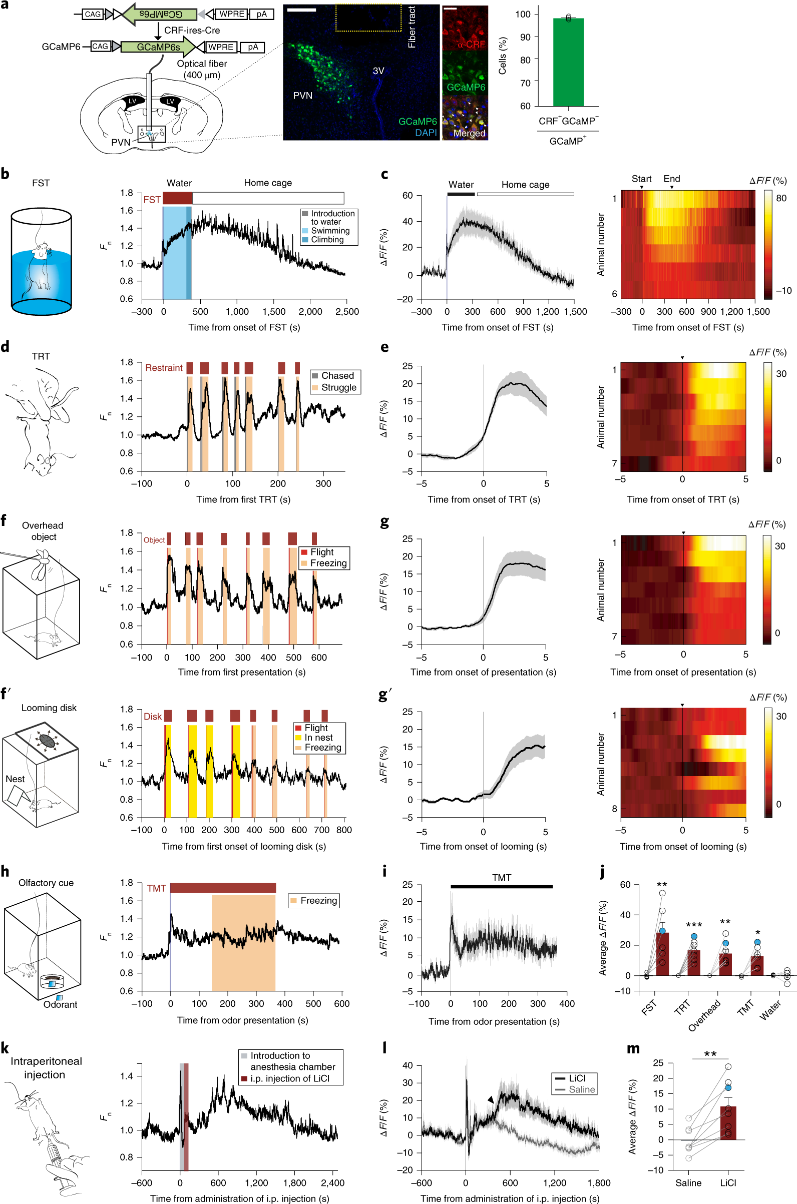 Rapid Biphasic Crf Neuronal Responses Encode Positive And Negative Valence Nature Neuroscience
