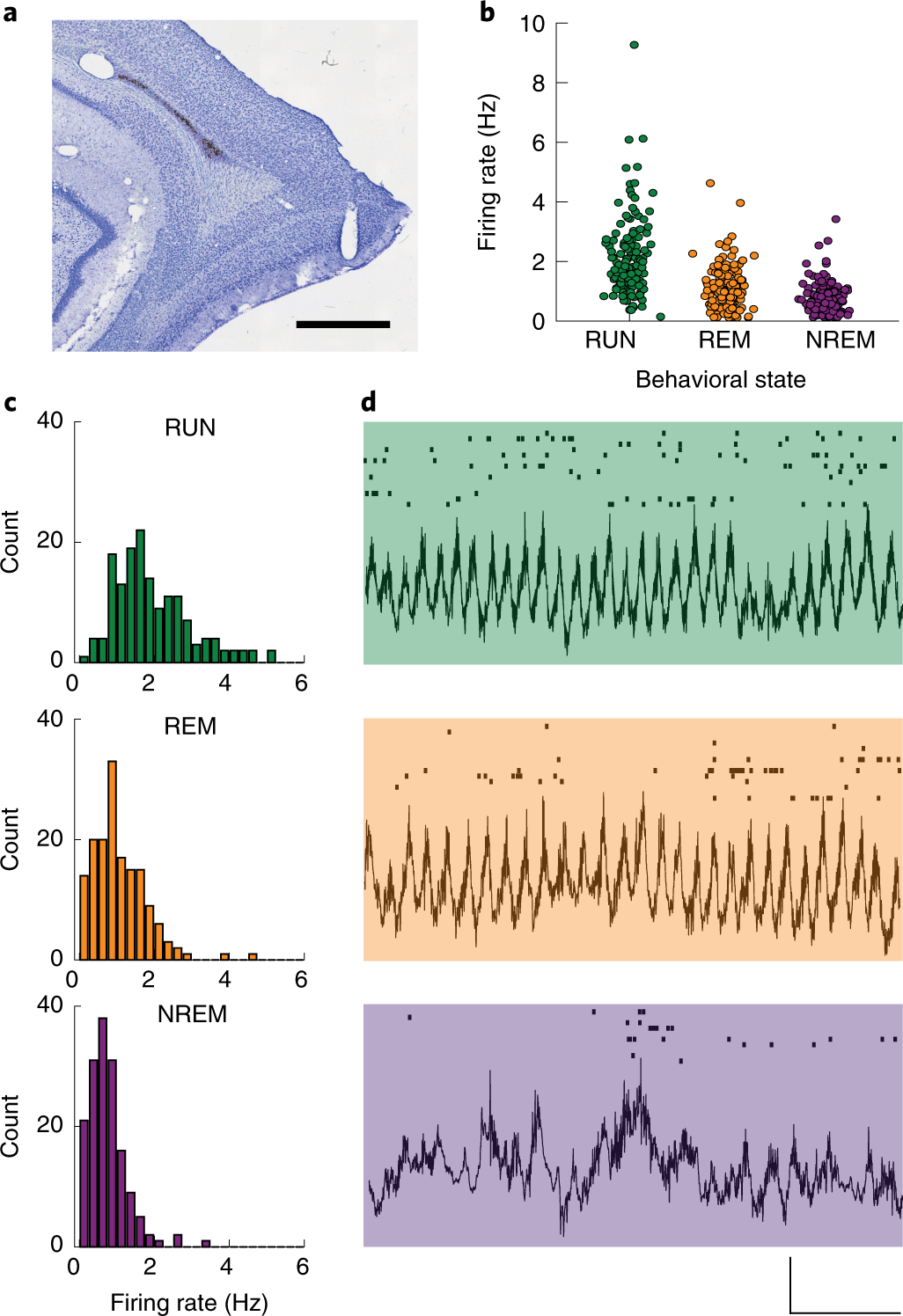 Grid cell co-activity patterns during sleep reflect spatial