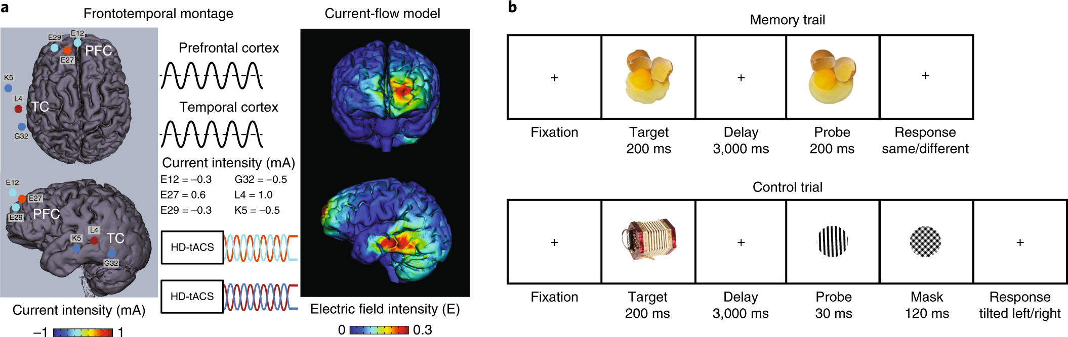 Working memory revived in older adults by synchronizing