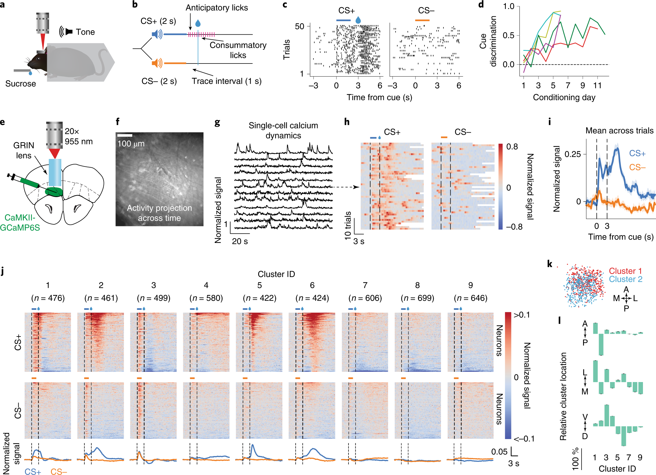 Single-cell activity tracking reveals that orbitofrontal neurons