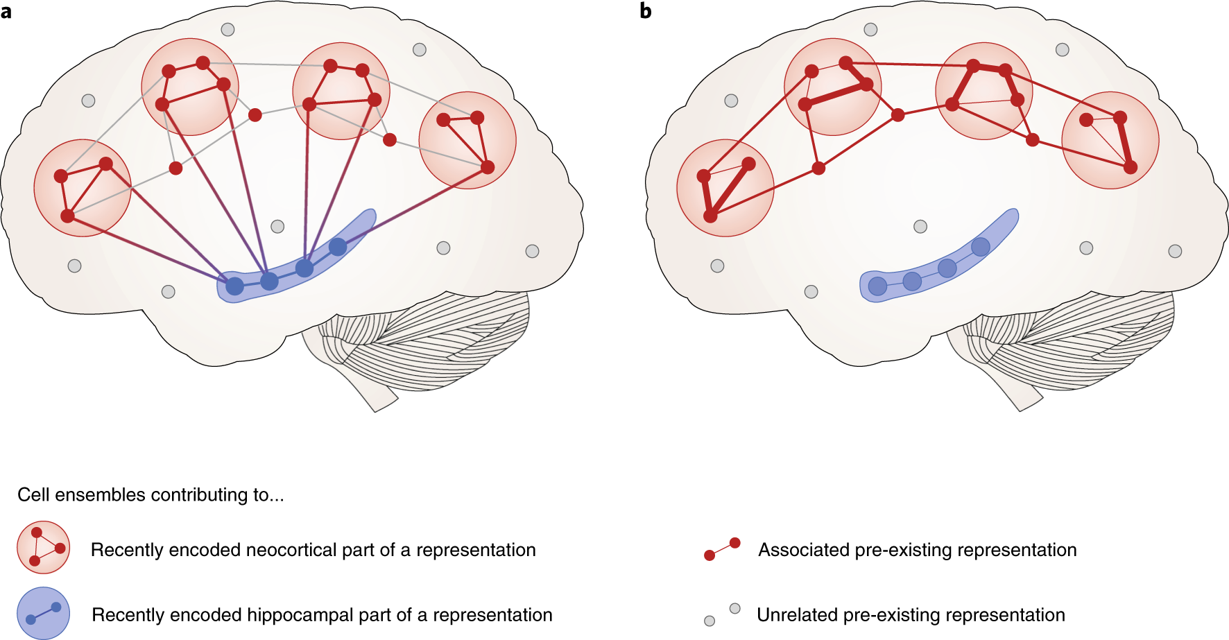 Mechanisms of systems memory consolidation during sleep