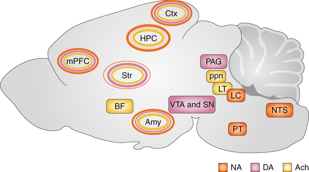 Neuromodulation in circuits of aversive emotional learning