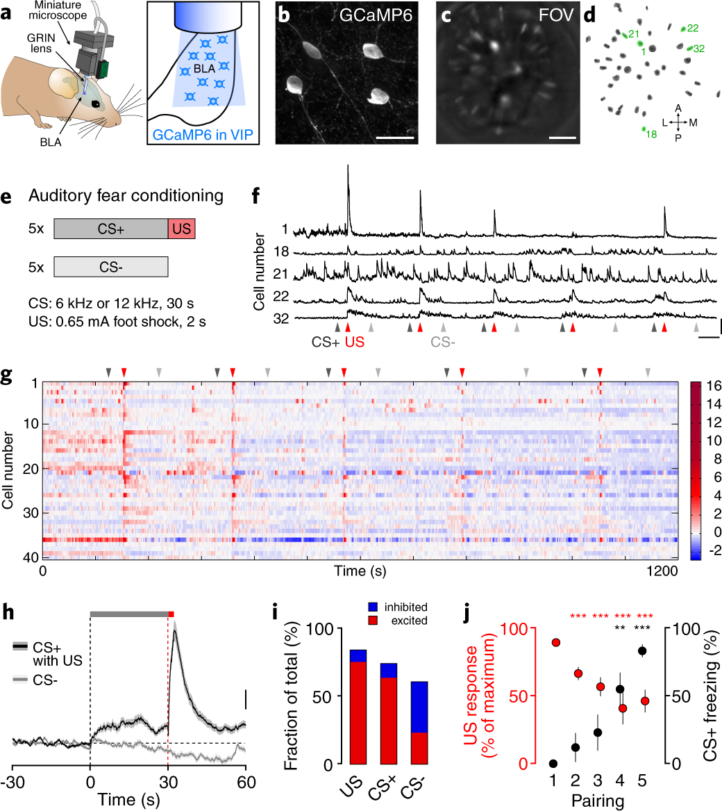 Adaptive disinhibitory gating by VIP interneurons permits associative