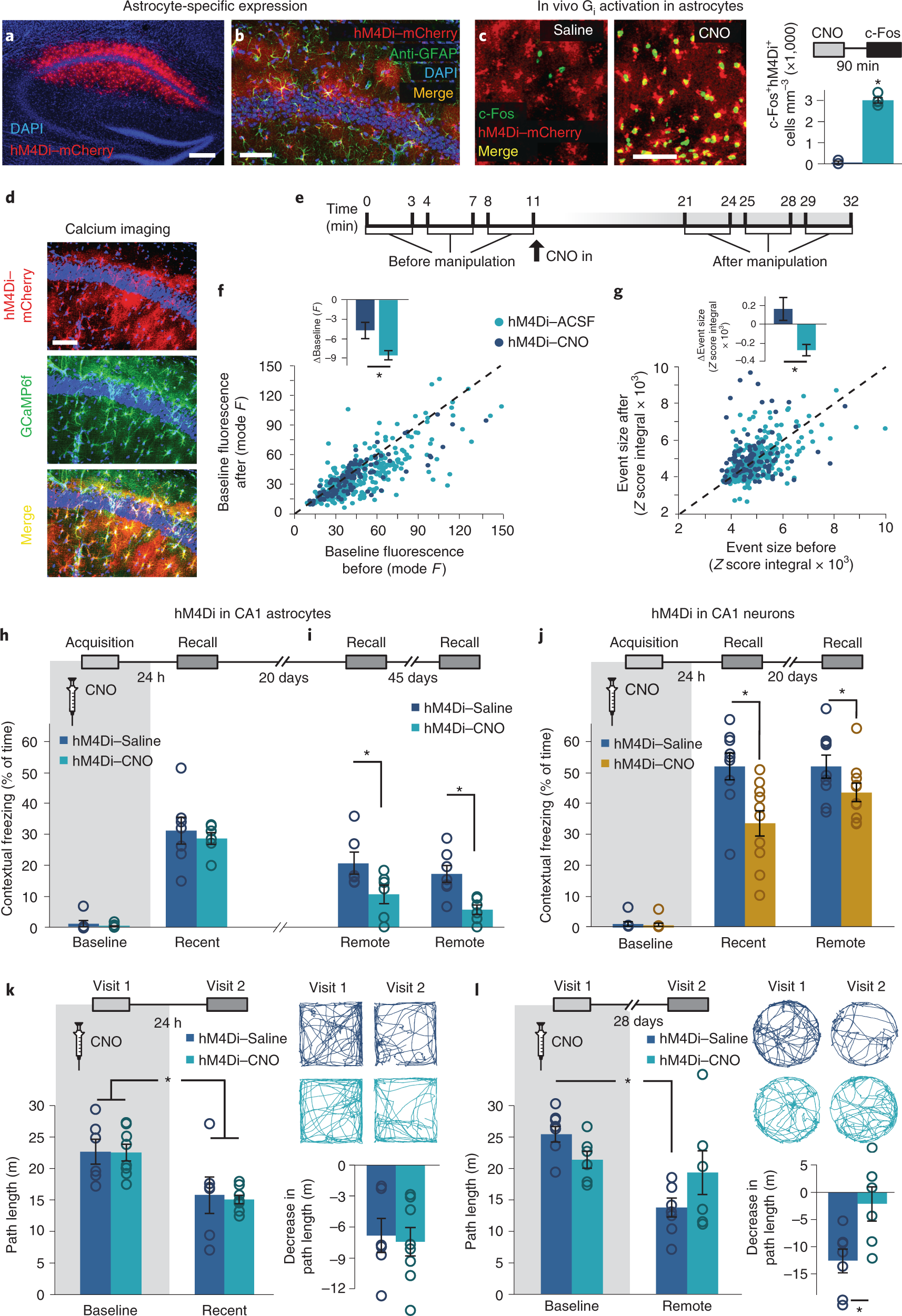 Astrocytes contribute to remote memory formation by modulating hippoca