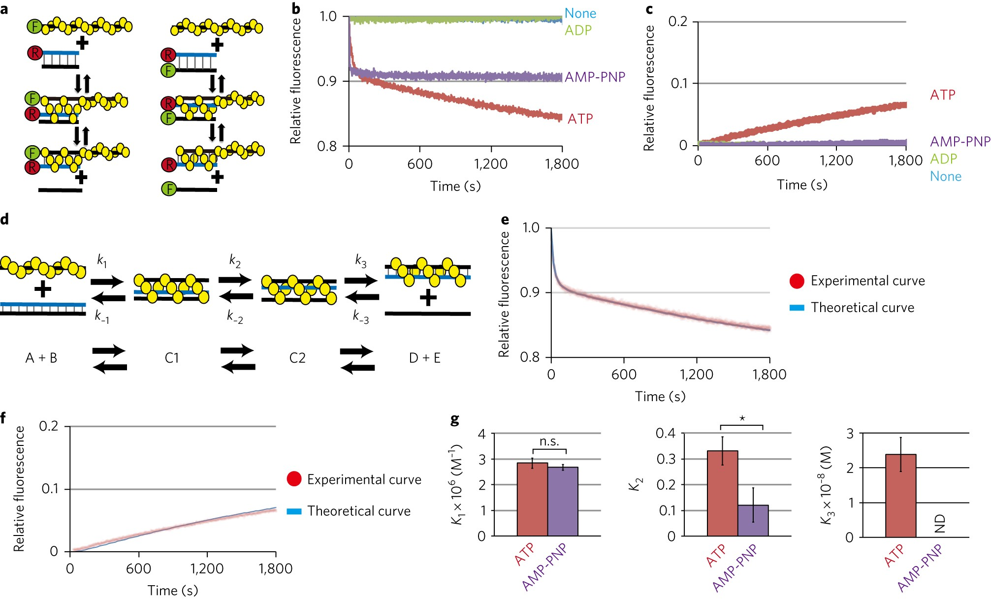 Two three-strand intermediates are processed during Rad51-driven DNA strand  exchange   Nature Structural & Molecular Biology