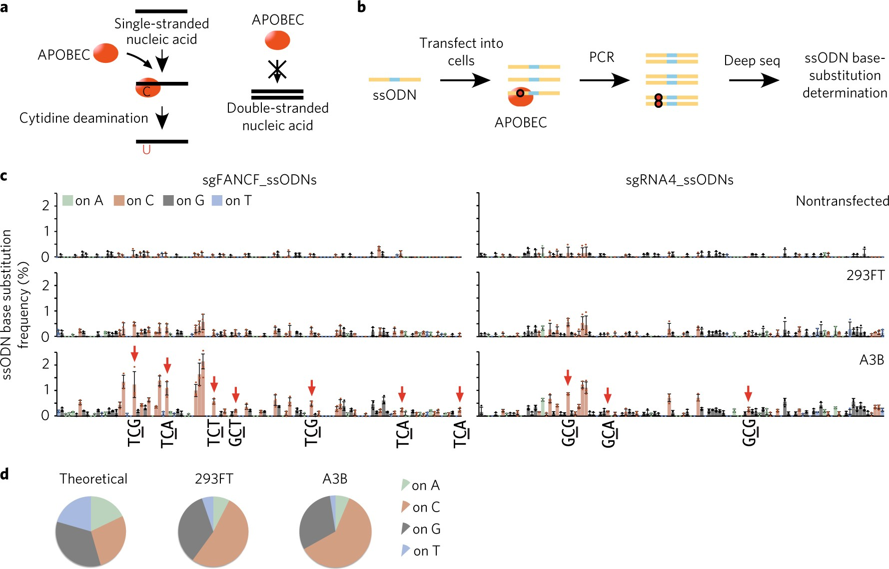 Apobec3 induces mutations during repair of crisprcas9 generated apobec3 induces mutations during repair of crisprcas9 generated dna breaks nature structural molecular biology pooptronica Images