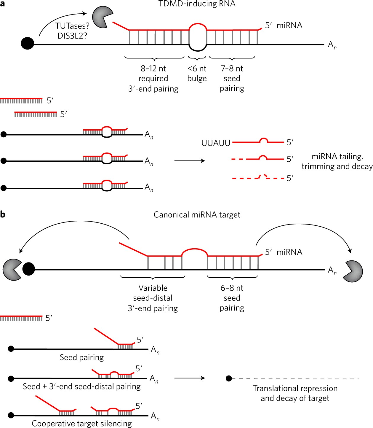 Turning the table on miRNAs | Nature Structural & Molecular