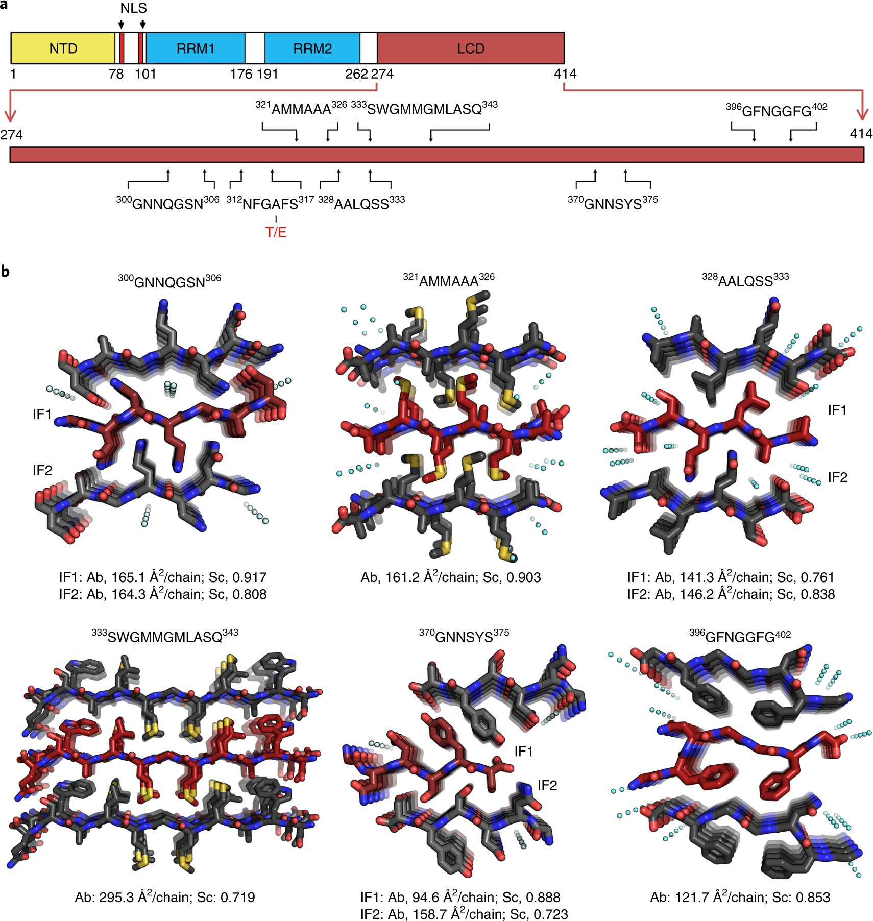 Atomic structures of TDP-43 LCD segments and insights into