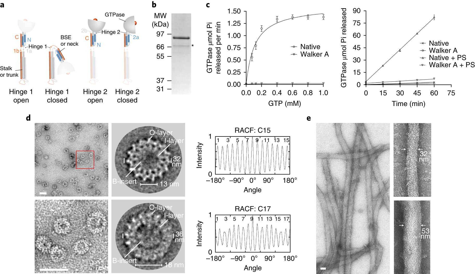Structure of a mitochondrial fission dynamin in the closed