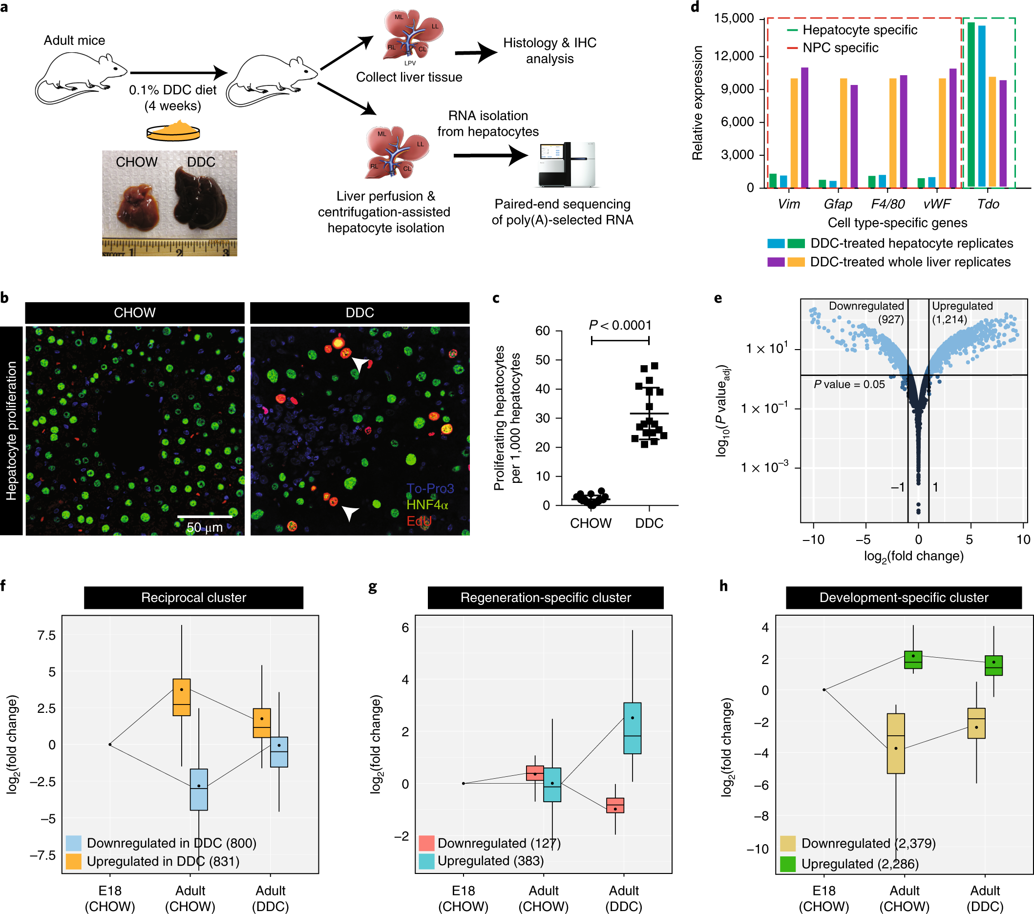 Alternative splicing rewires Hippo signaling pathway in hepatocytes to  promote liver regeneration | Nature Structural & Molecular Biology