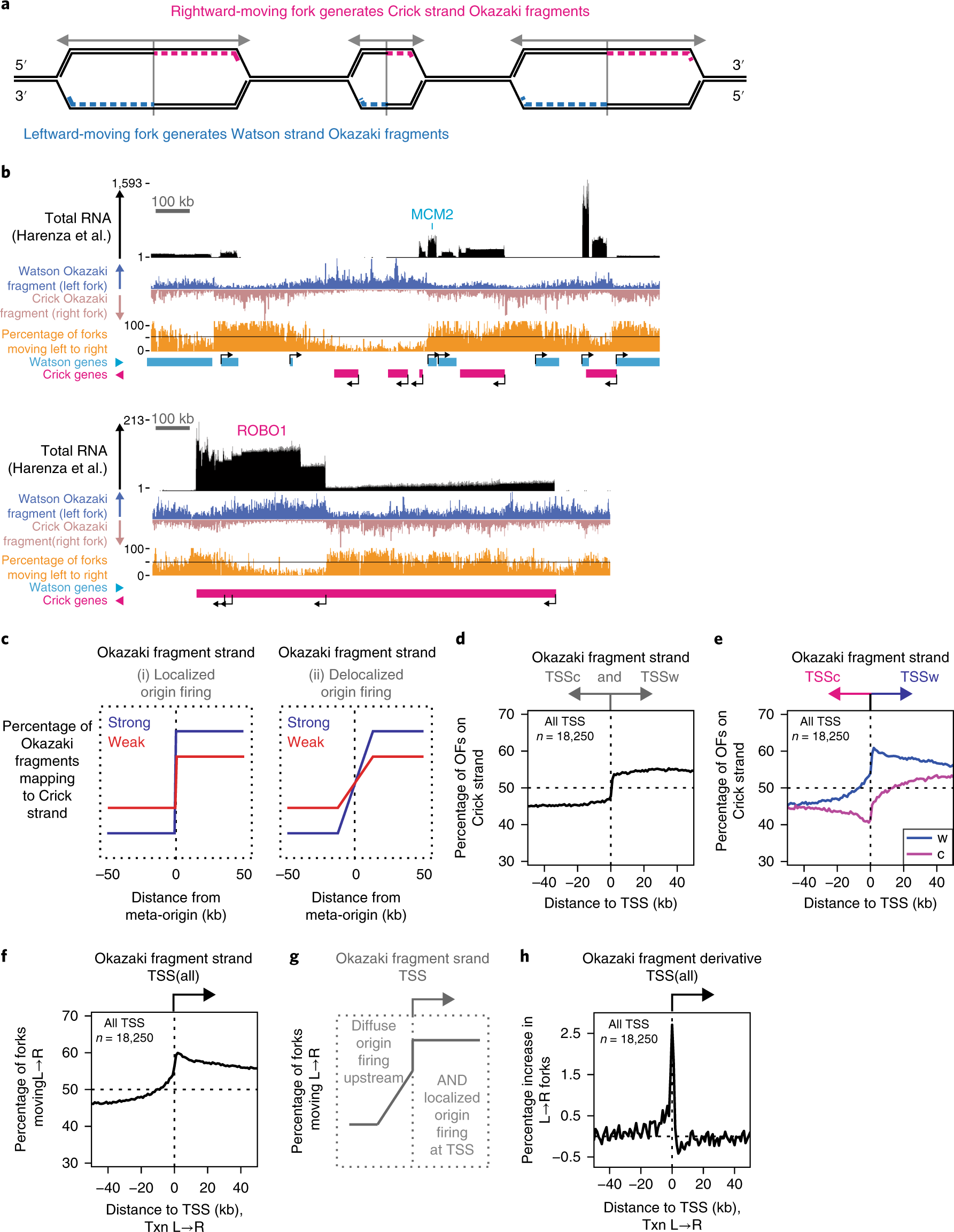 Transcription shapes DNA replication initiation and