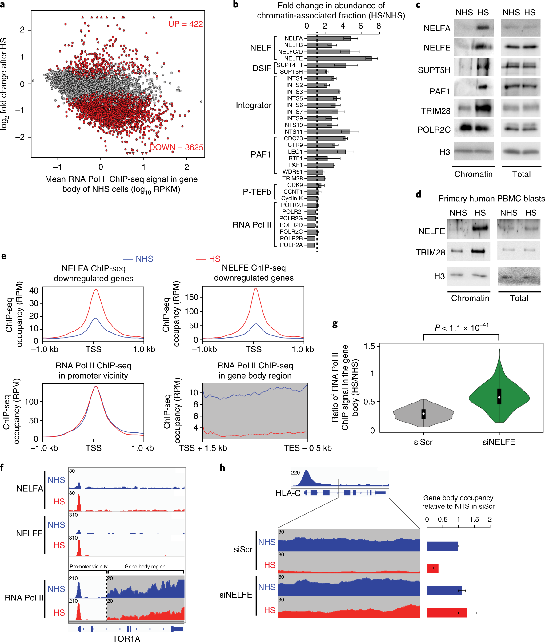 Nascent-protein ubiquitination is required for heat shock–induced