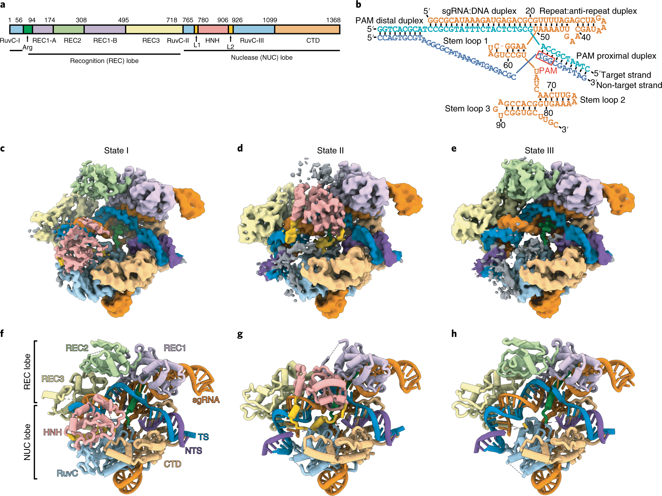 Cryo-EM structures reveal coordinated domain motions that govern DNA c