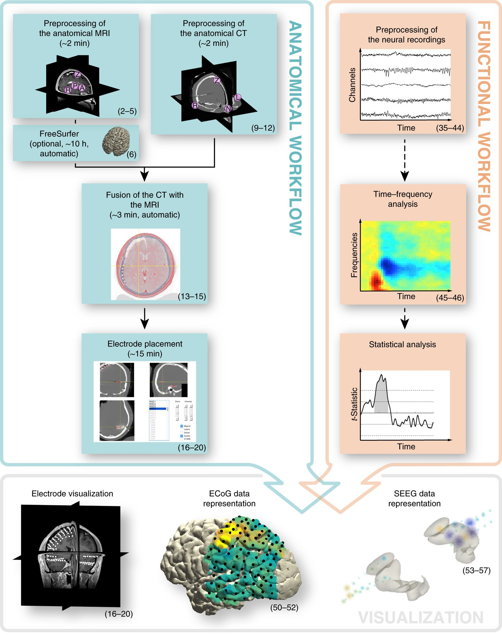 Integrated Analysis Of Anatomical And Electrophysiological Human