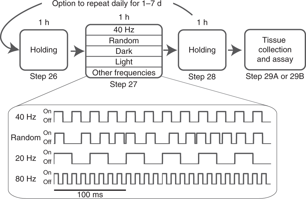 40 hz light 40hz alzheimer's noninvasive 40hz light flicker to recruit microglia and reduce amyloid beta load nature protocols
