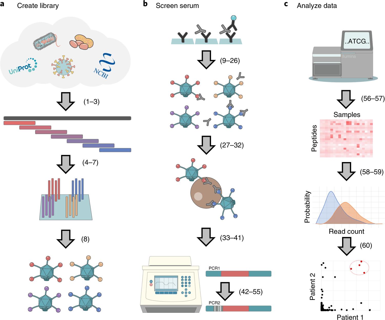 PhIP-Seq characterization of serum antibodies using