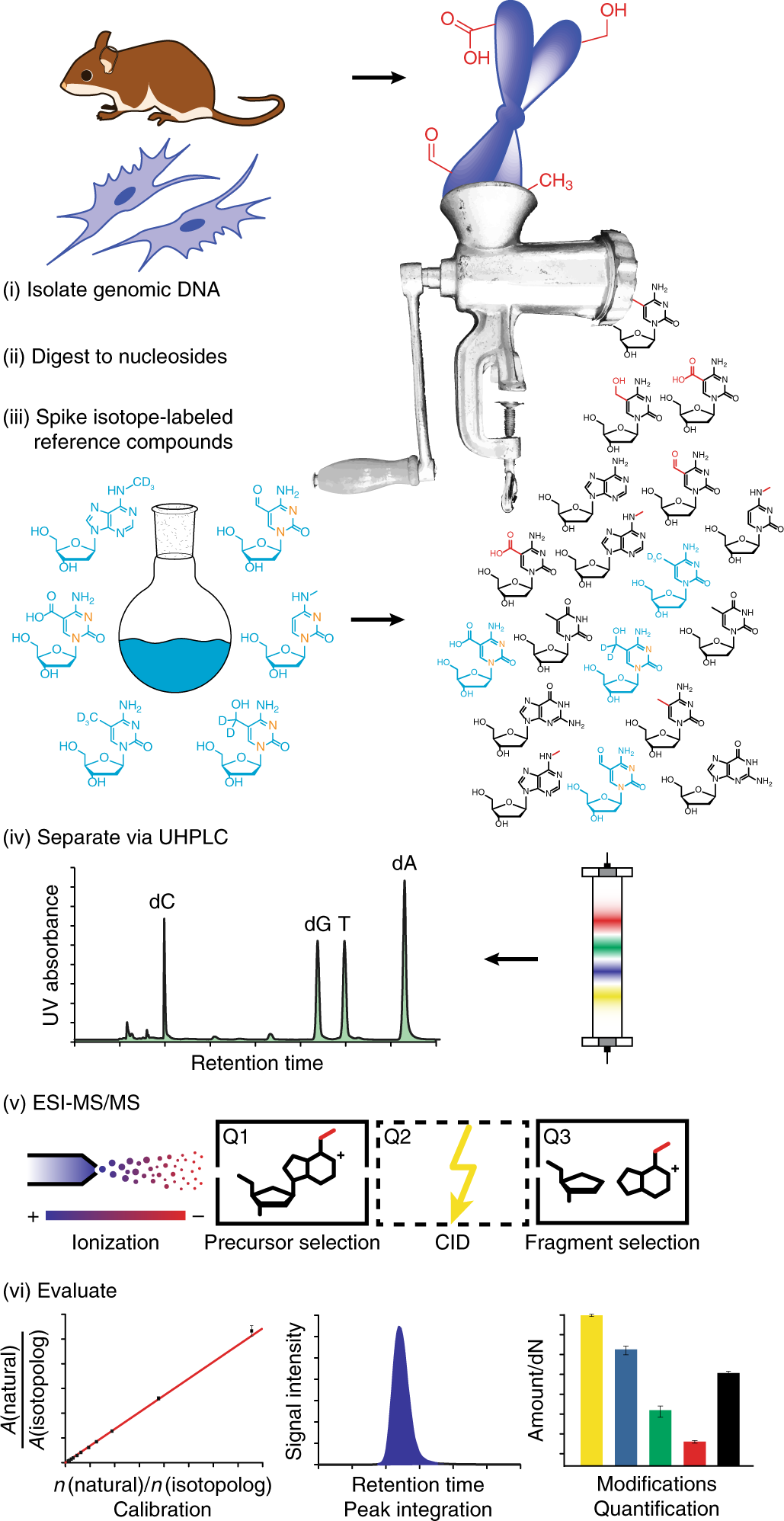 Isotope-dilution mass spectrometry for exact quantification