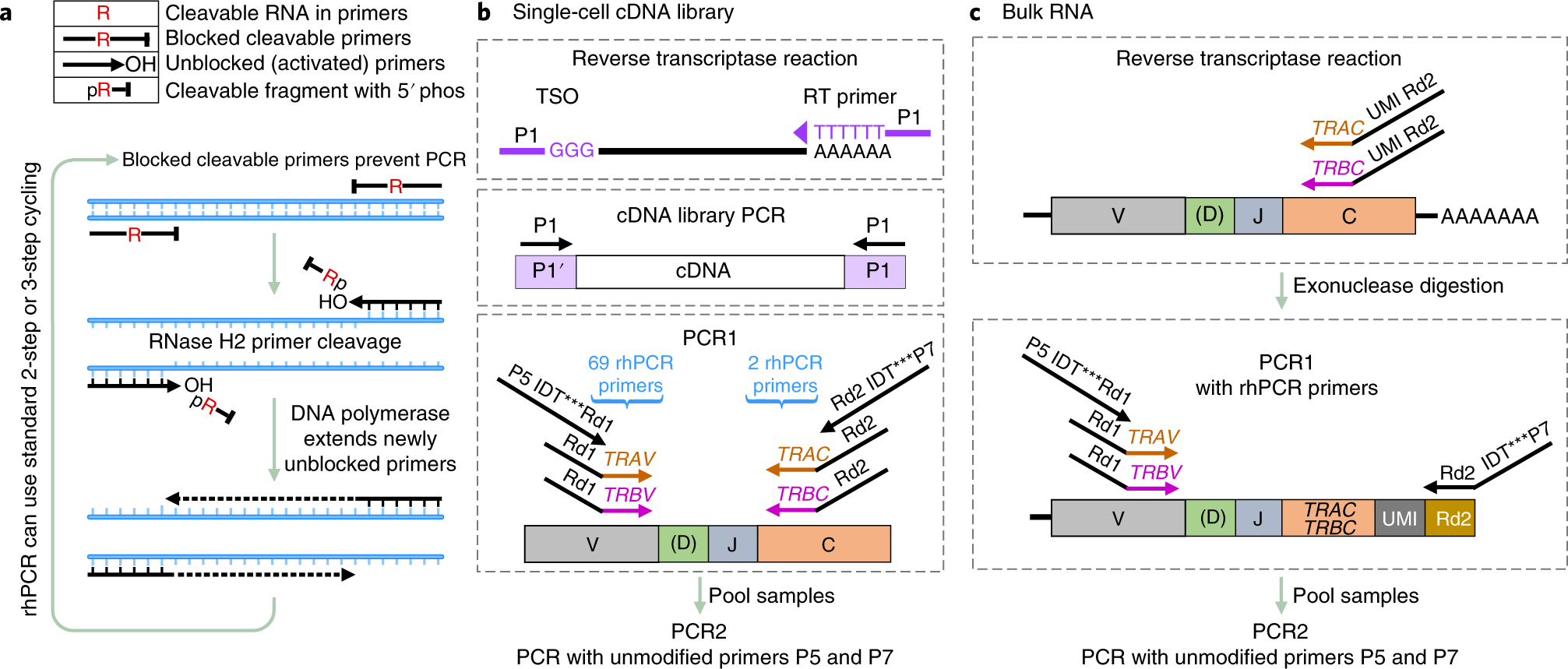 RNase H–dependent PCR-enabled T-cell receptor sequencing for