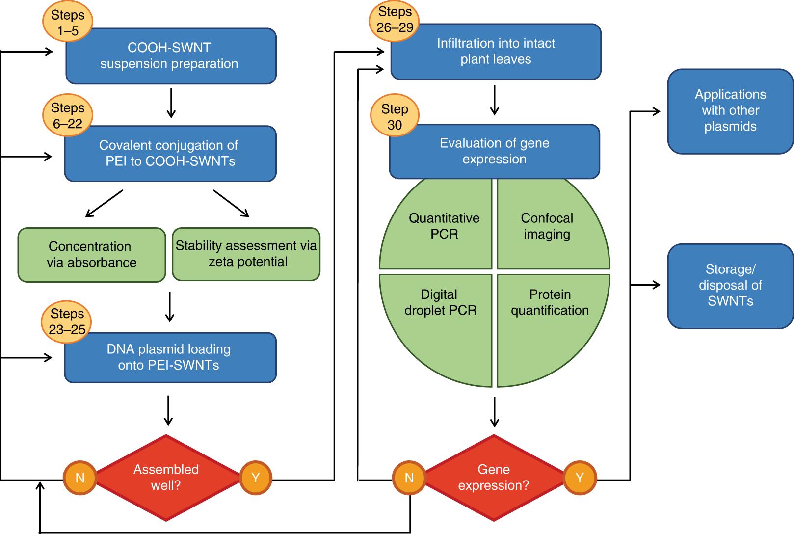 Carbon nanotube–mediated DNA delivery without transgene integrat