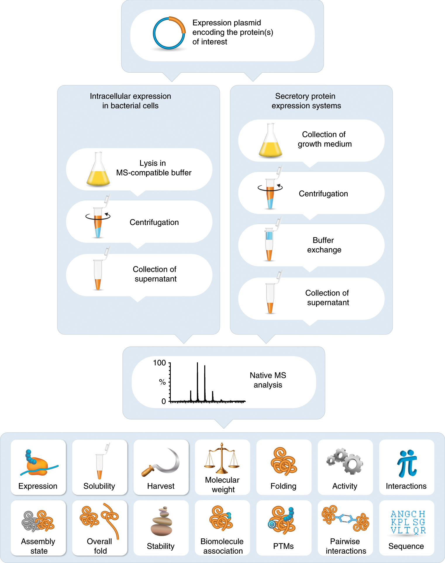 Direct characterization of overproduced proteins by native mass spectr