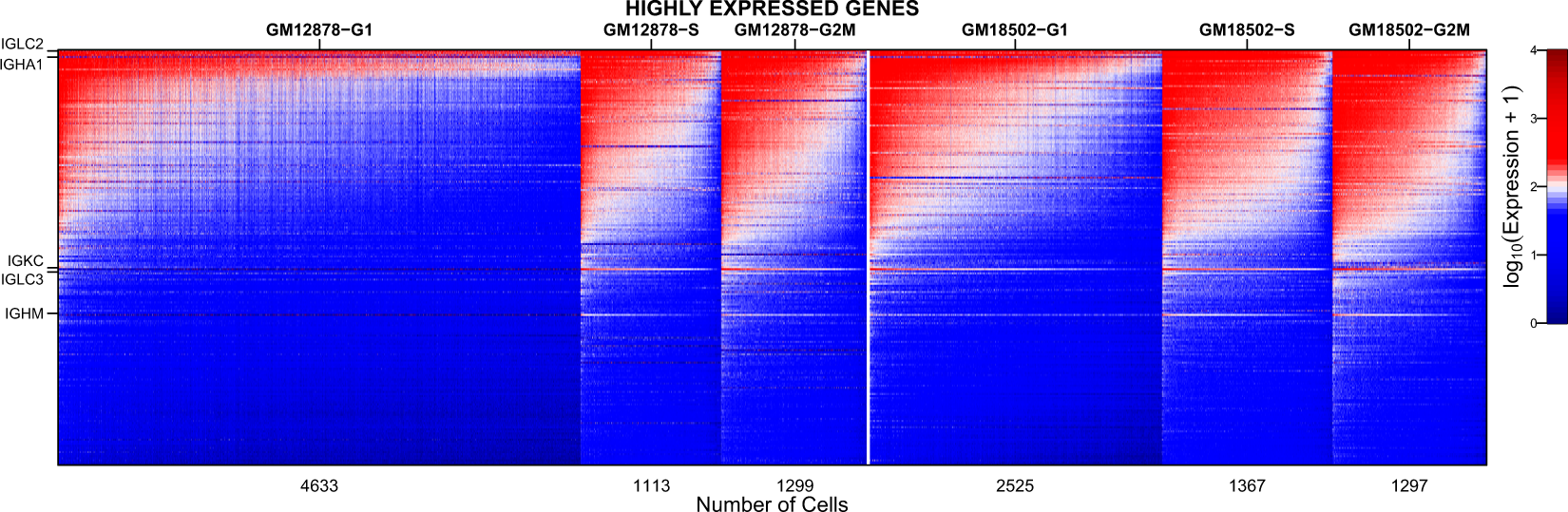 Single-cell RNA sequencing of a European and an African