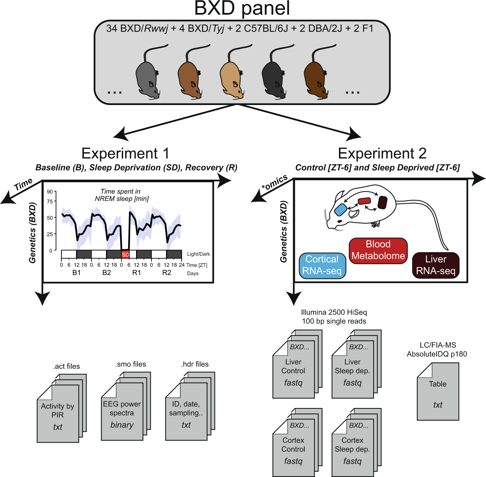 A multi-omics digital research object for the genetics of