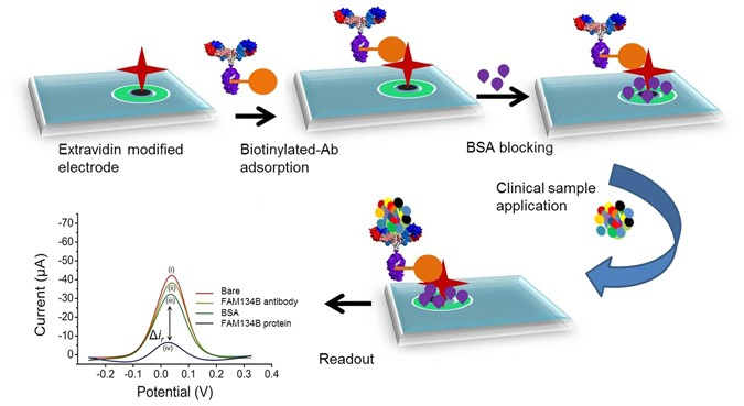 An electrochemical method for sensitive and rapid detection