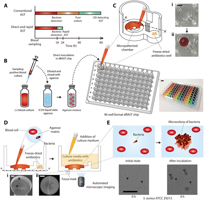 Direct Rapid Antimicrobial Susceptibility Test From Positive Blood