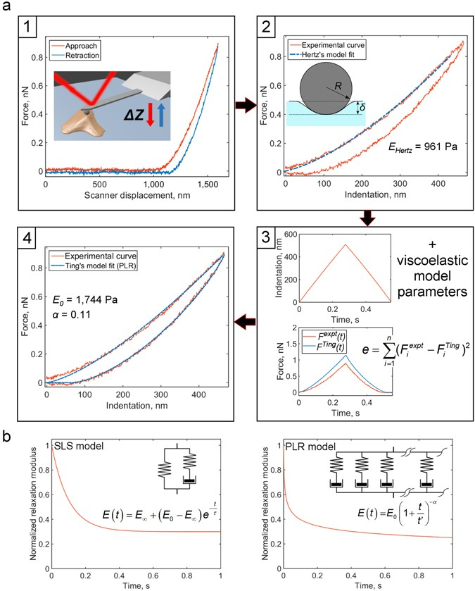 Measuring nanoscale viscoelastic parameters of cells directly from