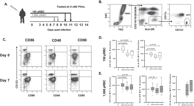 Plasmacytoid dendritic cells appear inactive during sub