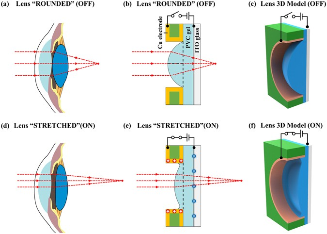 c0feb7ab58 The comparisons between the lens in a human eye and the bio-inspired PVC  gel micro-lens. (a