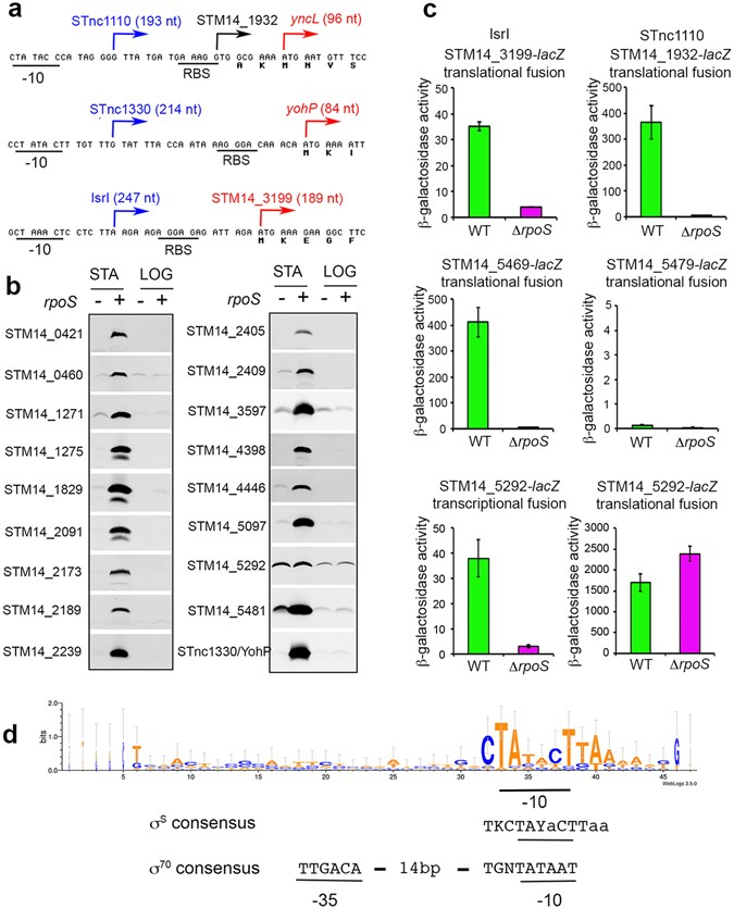 Proteome Remodelling By The Stress Sigma Factor Rpos S In