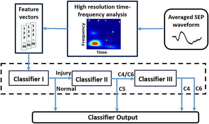 Component analysis of somatosensory evoked potentials for architecture of the sep based classification system for identifying the location of pathological changes caused by sci publicscrutiny Gallery