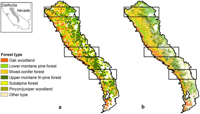 the polygons show the three transects simulated in the northern central and southern sierra nevada usa a distribution of forest types derived from fia