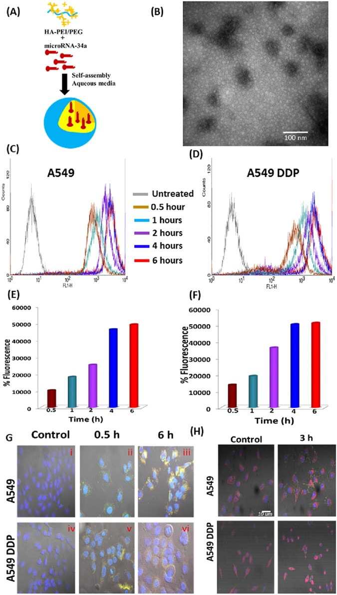 MicroRNA-34a Encapsulated in Hyaluronic Acid Nanoparticles