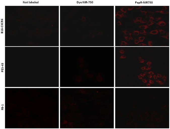 a novel cxcr4 targeted near infrared nir fluorescent probe